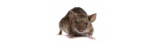anti souris produits pour la lutte anti souris en promo. Black Bedroom Furniture Sets. Home Design Ideas