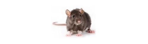 ULTRASONS RATS